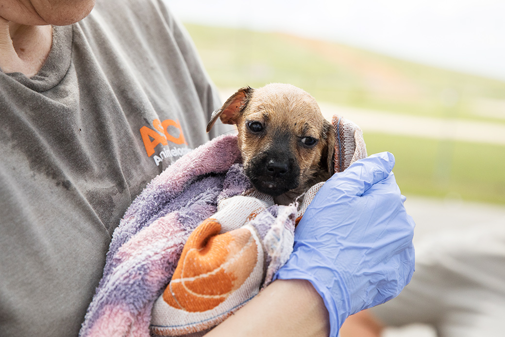 Pup being bathed and dried after being brought to safety