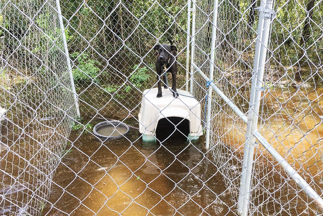 stranded dog