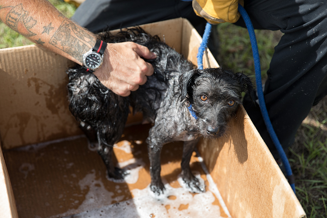 Pup being bathed after being brought to safety