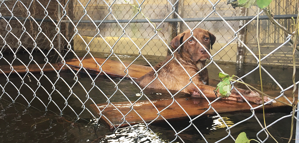 a dog in a flooded kennel