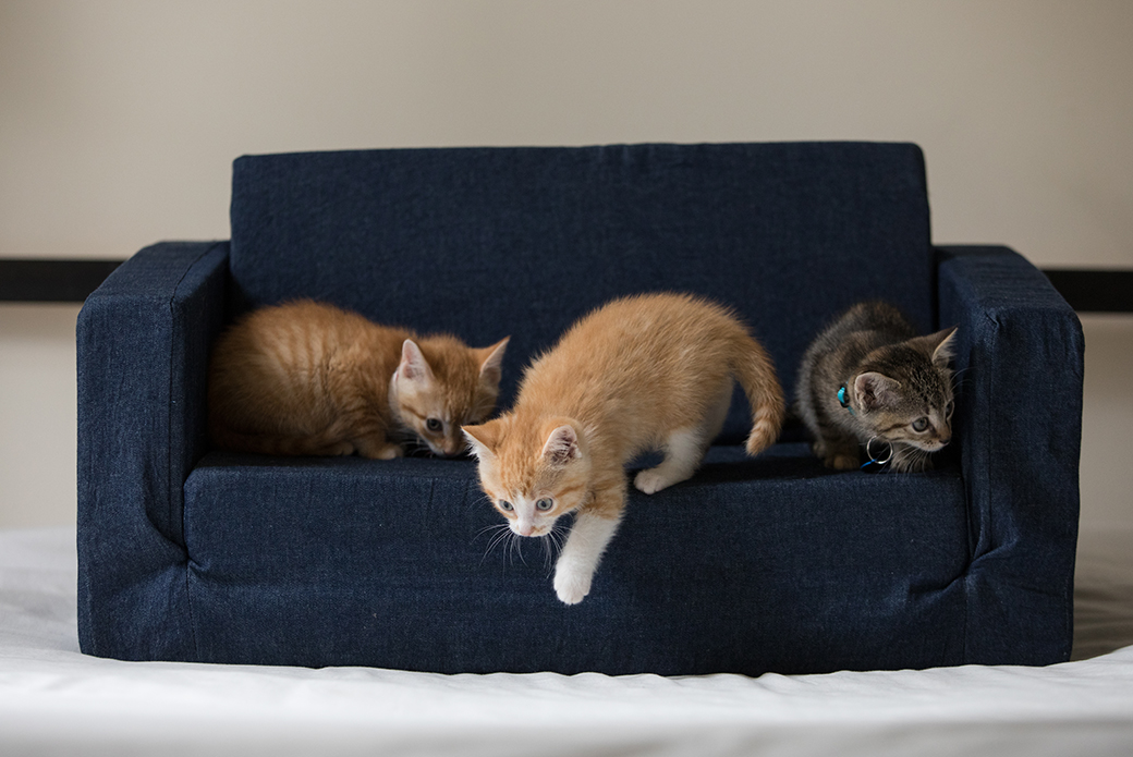 kittens on a couch