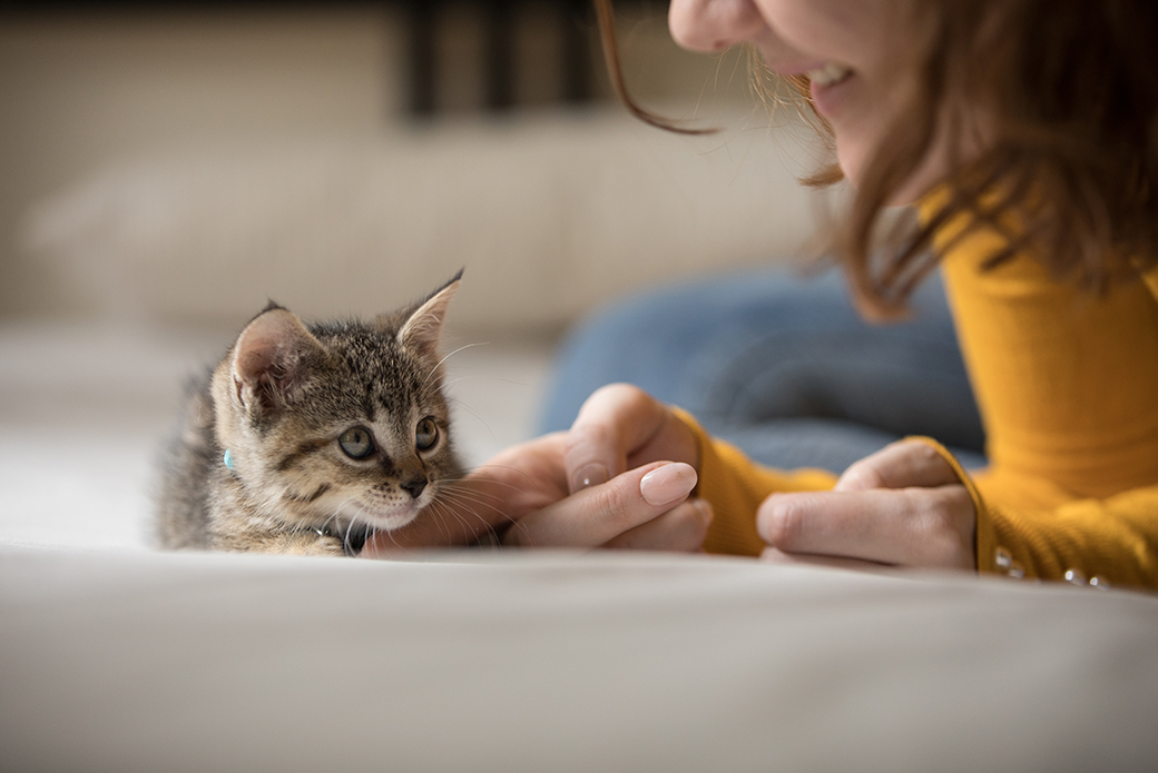a woman petting a kitten