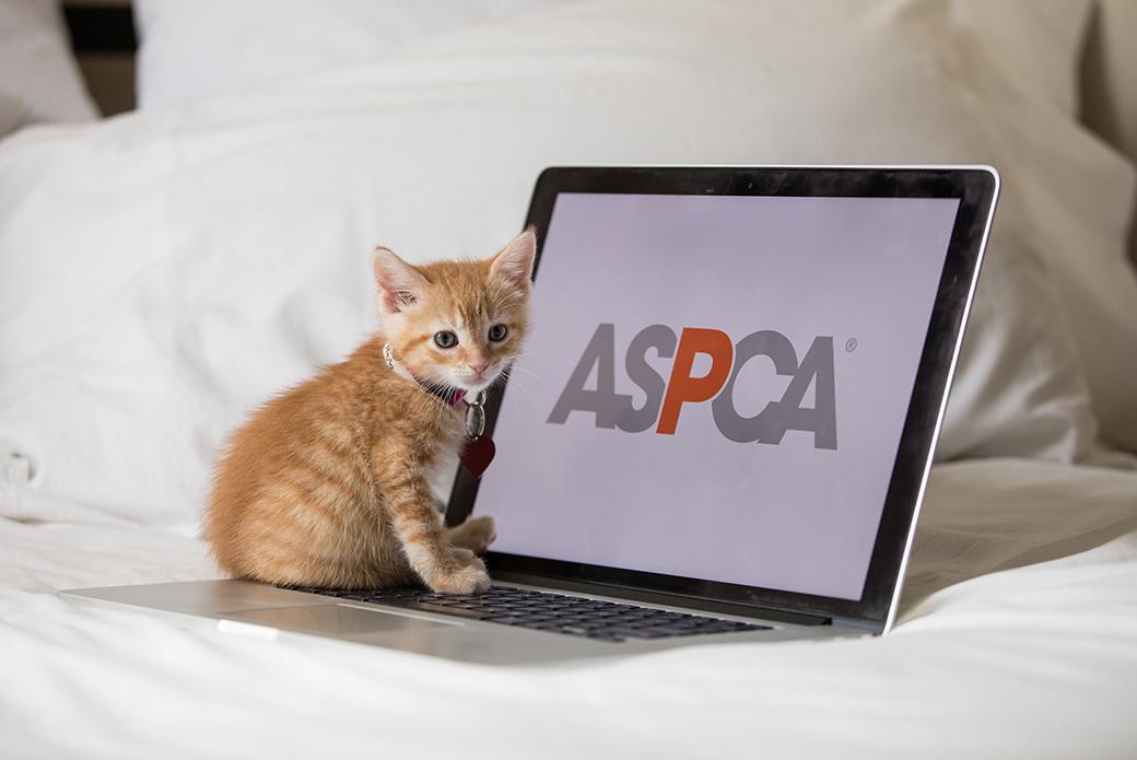 a kitten at a computer