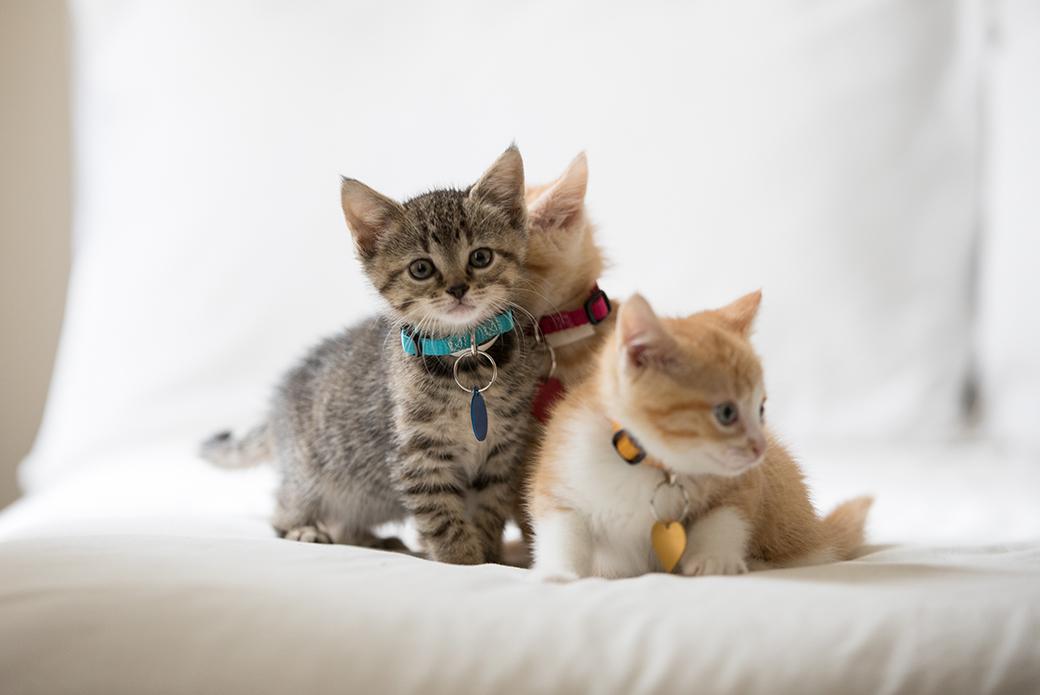 kittens on a pillow