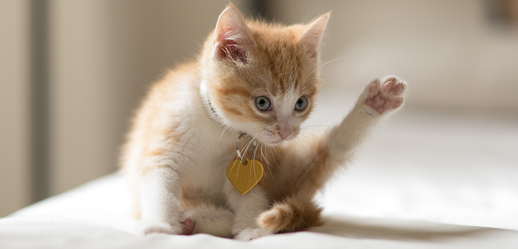 kitten with outstretched leg