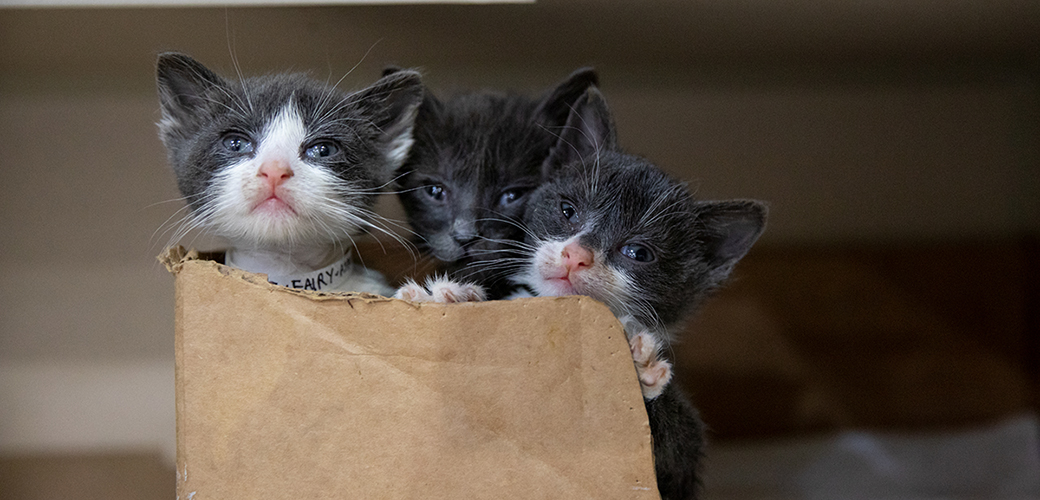 three kittens in a box