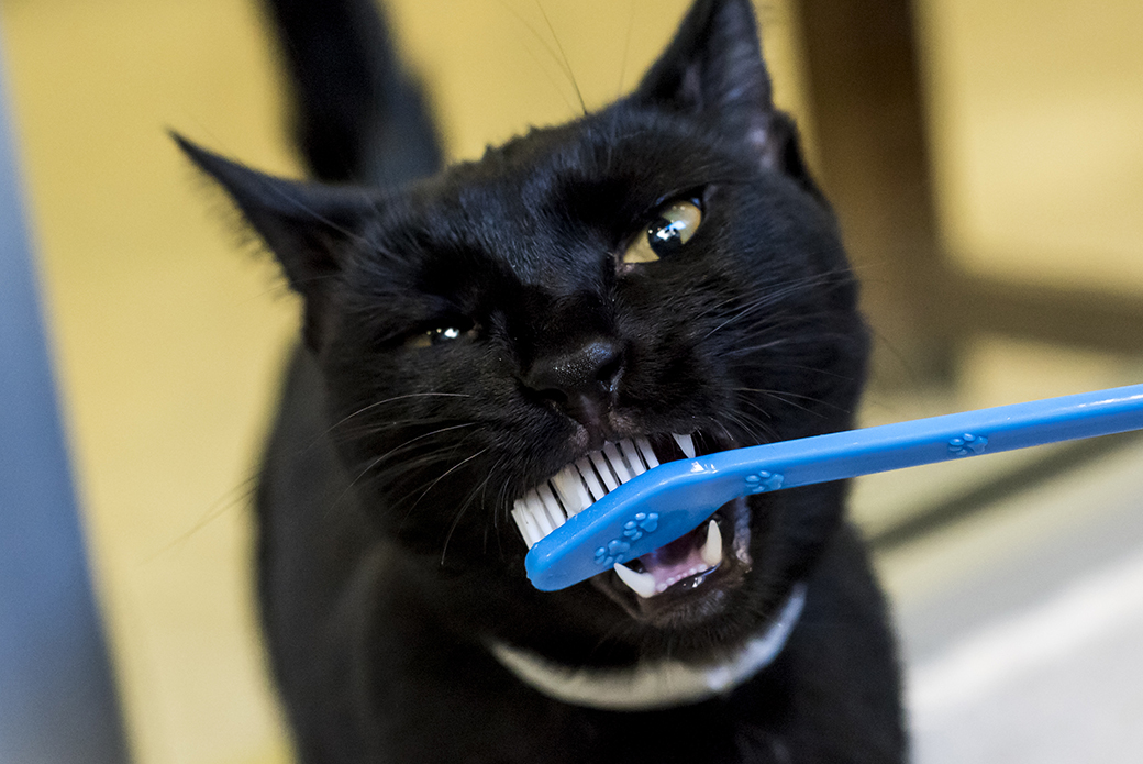 a cat with a toothbrush