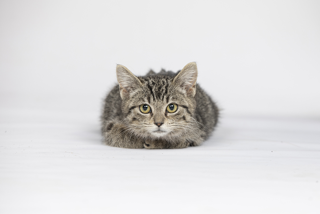 a cat resting