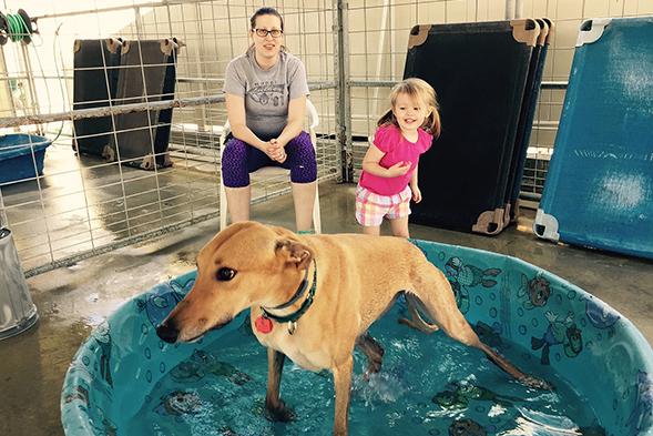 Grantee Highlight Series: Greyhound Adoption Center