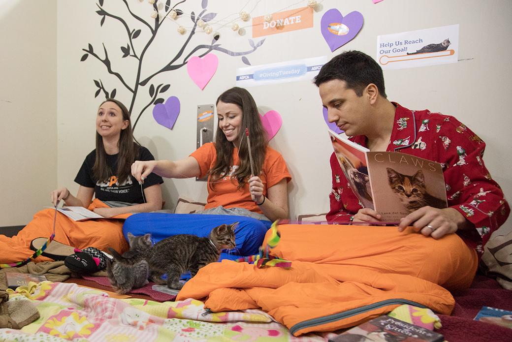 The kitten Slum-purr party