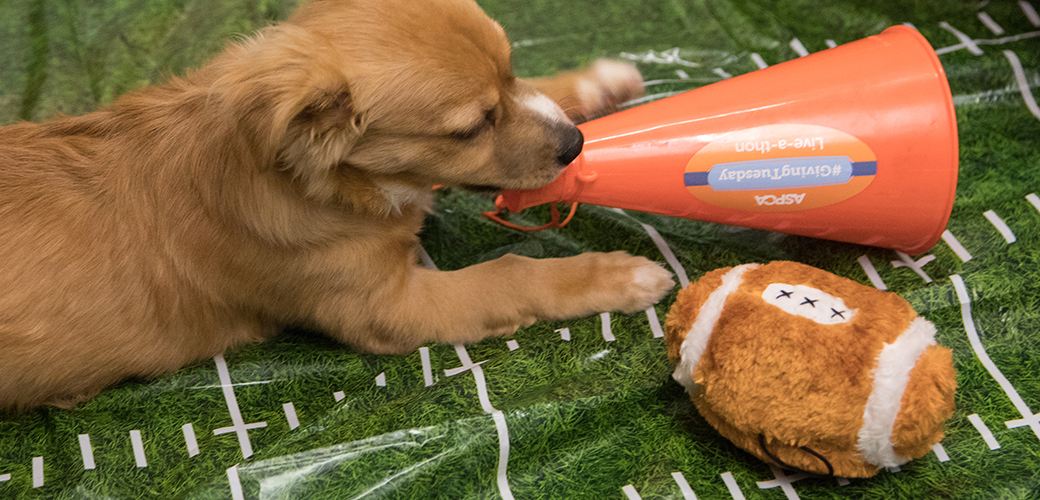 a puppy with a toy football and a megaphone