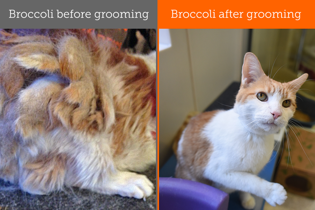 Hair Comes Trouble: Why Pets Need Regular Grooming