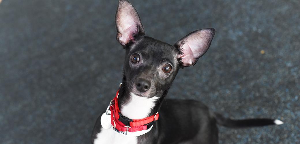 ASPCA Happy Tail: Paula