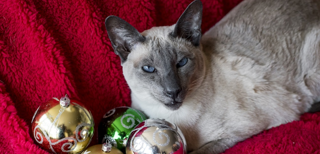 Cat with christmas tree ornaments
