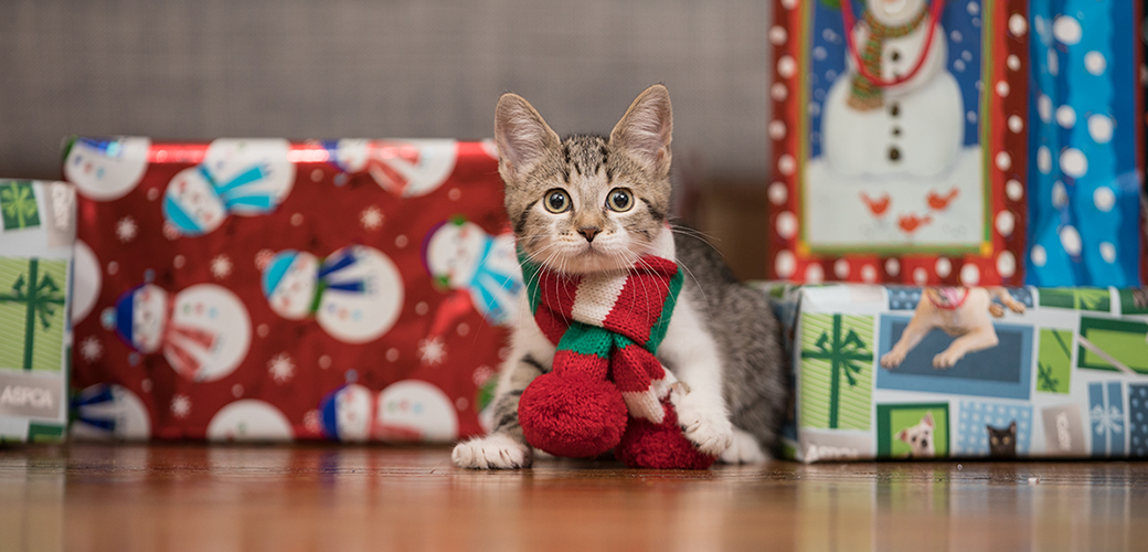 a kitten around some christmas gifts