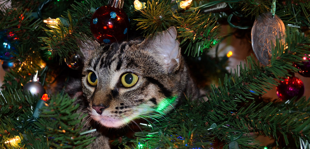 It's That Time of Year Again! Keep Your Pets Safe This Holiday Season with These Tips