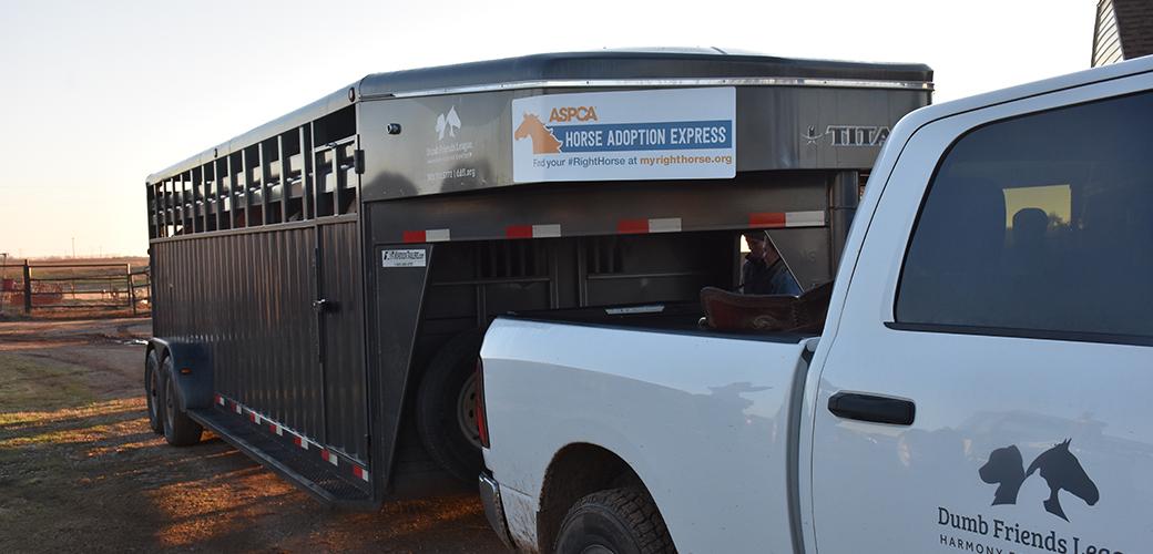 a horse transport truck