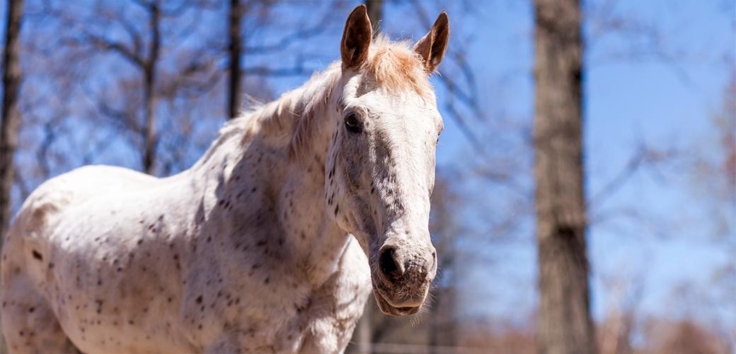 a horse outside
