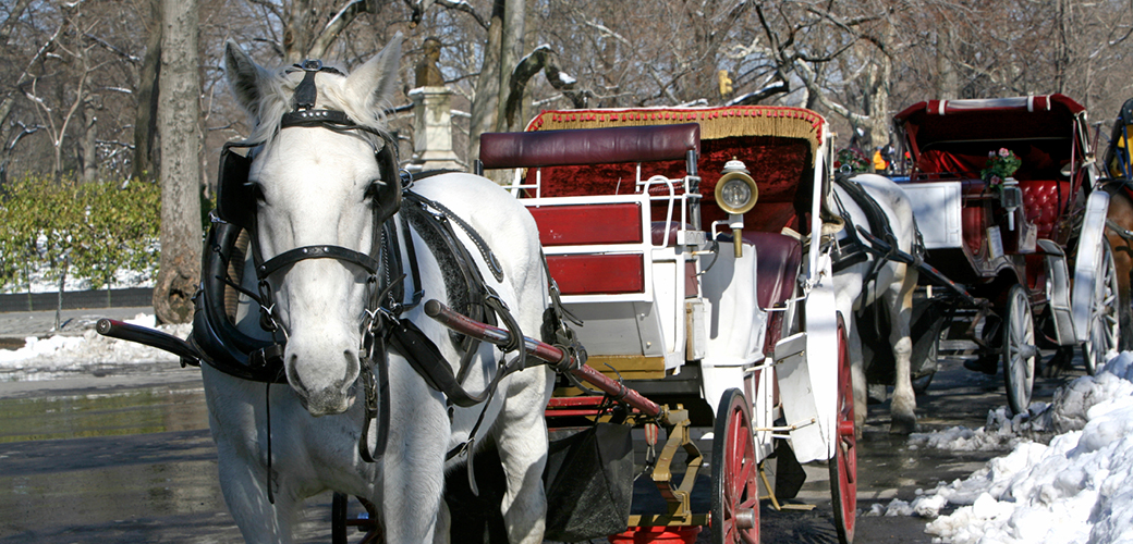 Speaking Up for Carriage Horses in New York City
