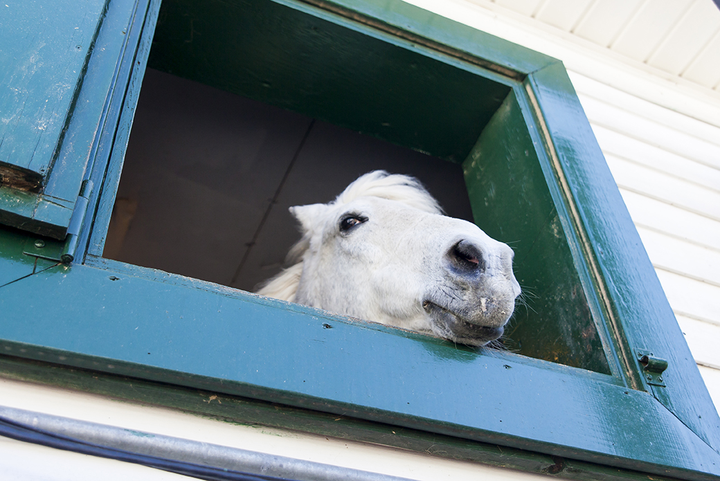a horse looking out a window