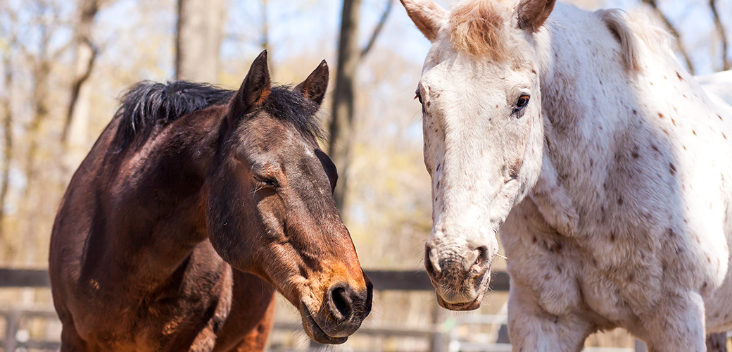 Annual Horse Slaughter Ban 1 Step Closer to Victory