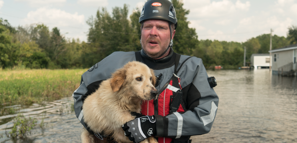 ASPCA responder carrying a dog through flood water