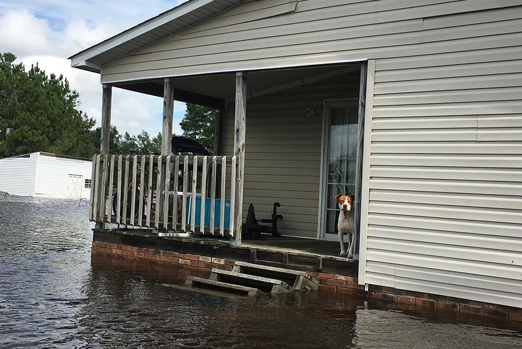 a dog stranded on a porch