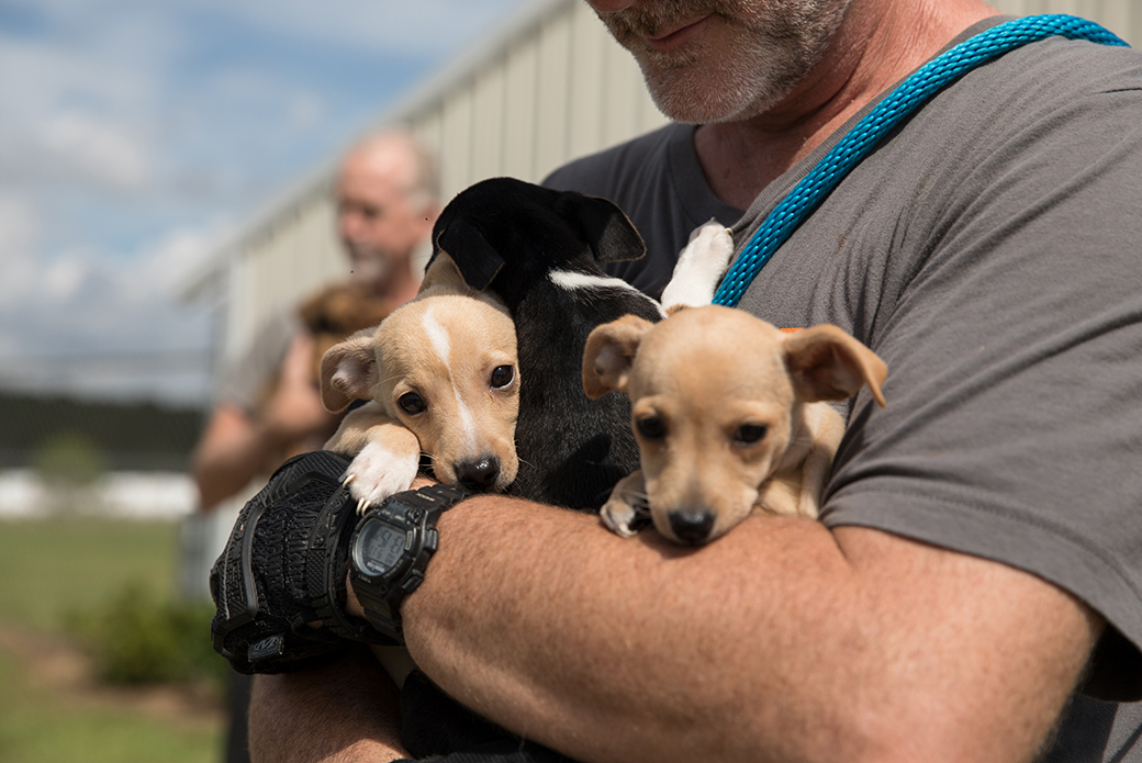 a volunteer holding three rescued puppies