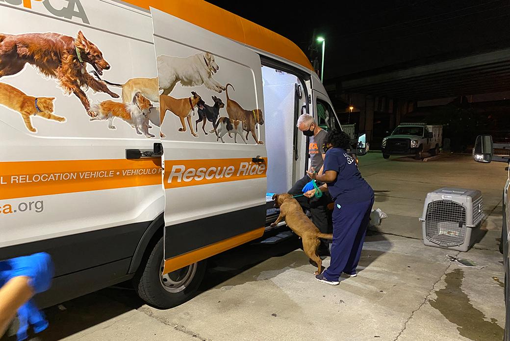 rescued dog entering an ASPCA transport