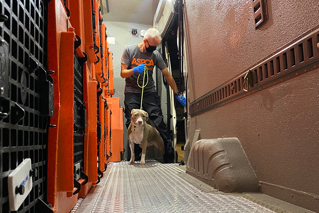 rescued dog in side an ASPCA transport