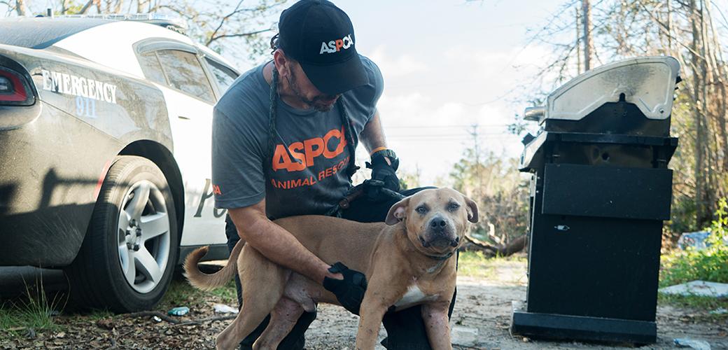 an aspca responder with a dog