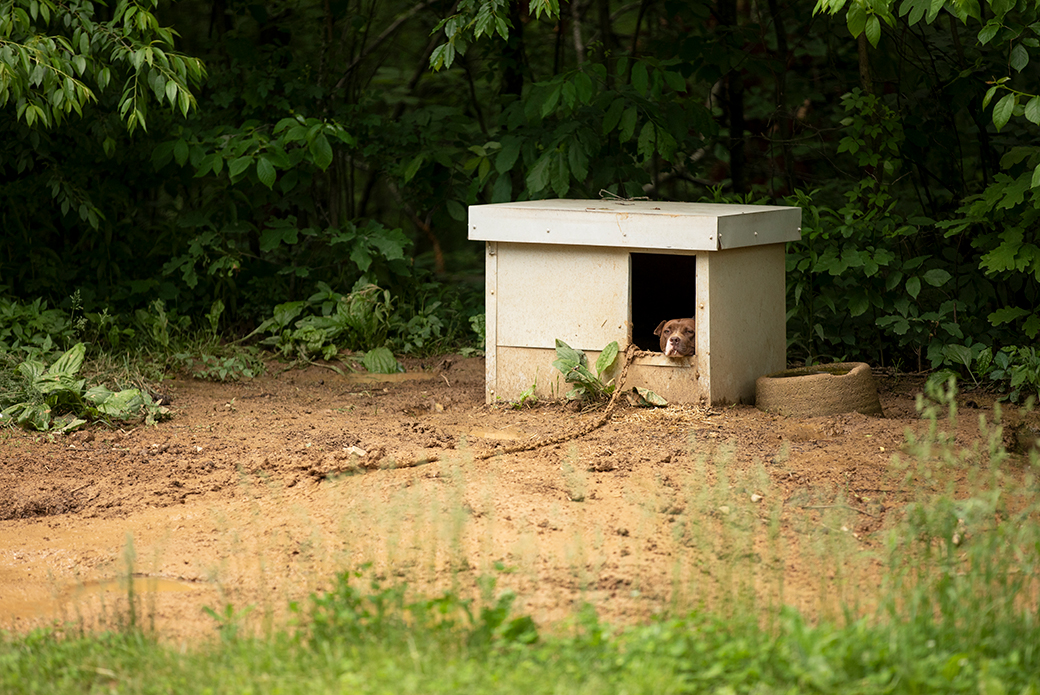 a dog chained resting in a small dog house