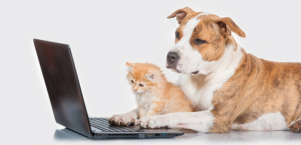 Internet Myths and Rumors: Pet Toxin Edition
