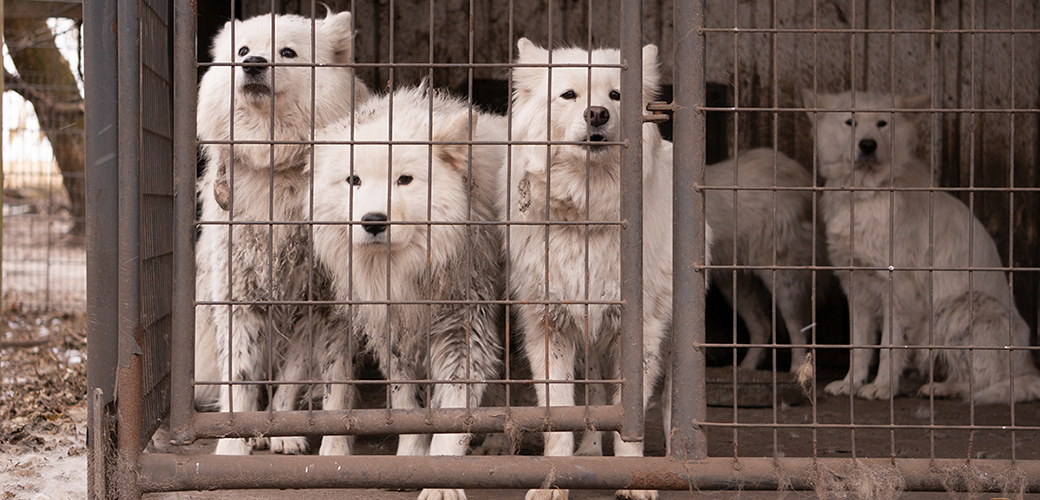 UPDATE: Charges Announced in Iowa Puppy Mill Case | ASPCA