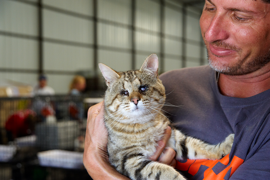 a rescued cat held by an aspca responder
