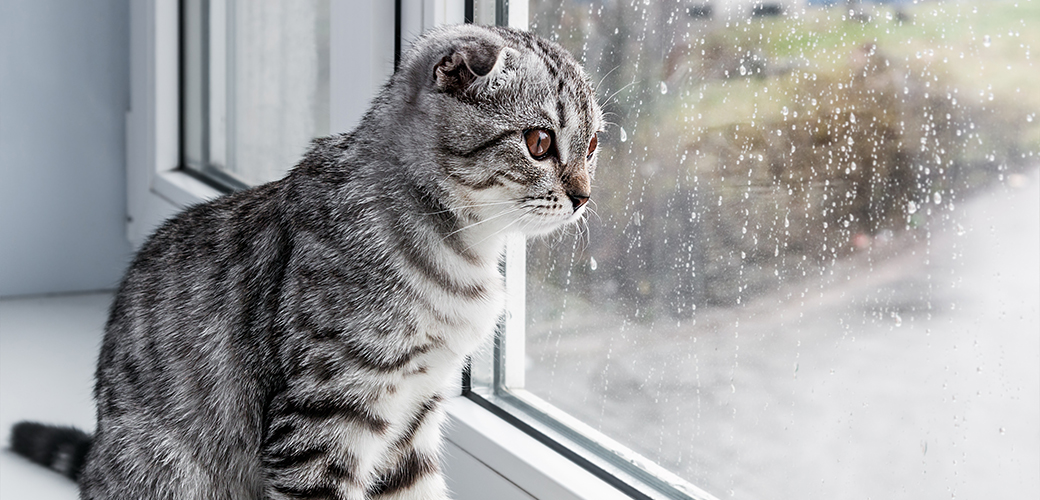 Spring Has Sprung! Find Out How to Keep Pets Safe During Springtime Storms
