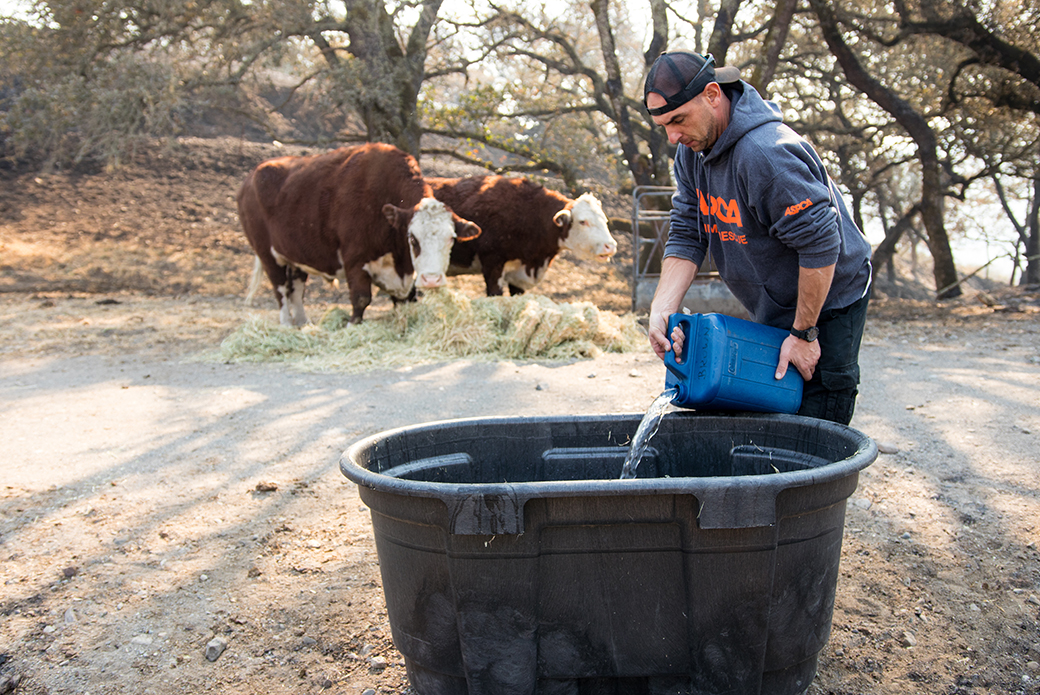 a responder filling a tub with water for cows to drink