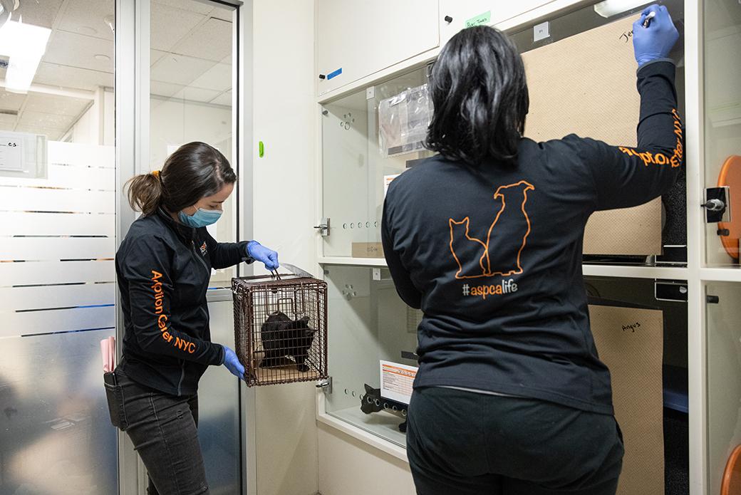 ASPCA staff members moving a cat