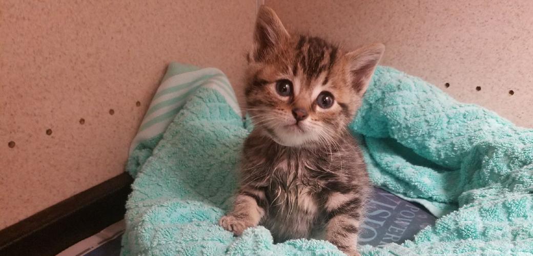 LA 1000th Kitten