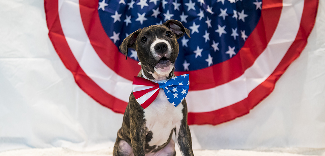 A dog with an american flag tie