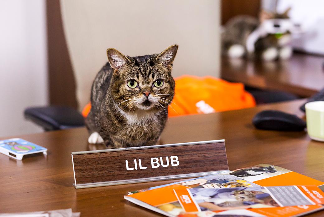 Lil BUB on a desk