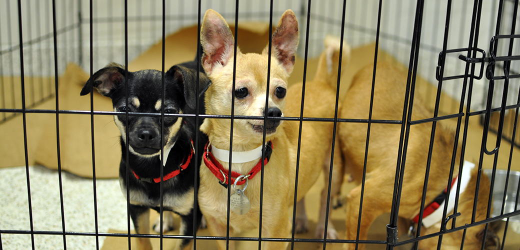 Maine Poised to Make History in Fight against Puppy Mills