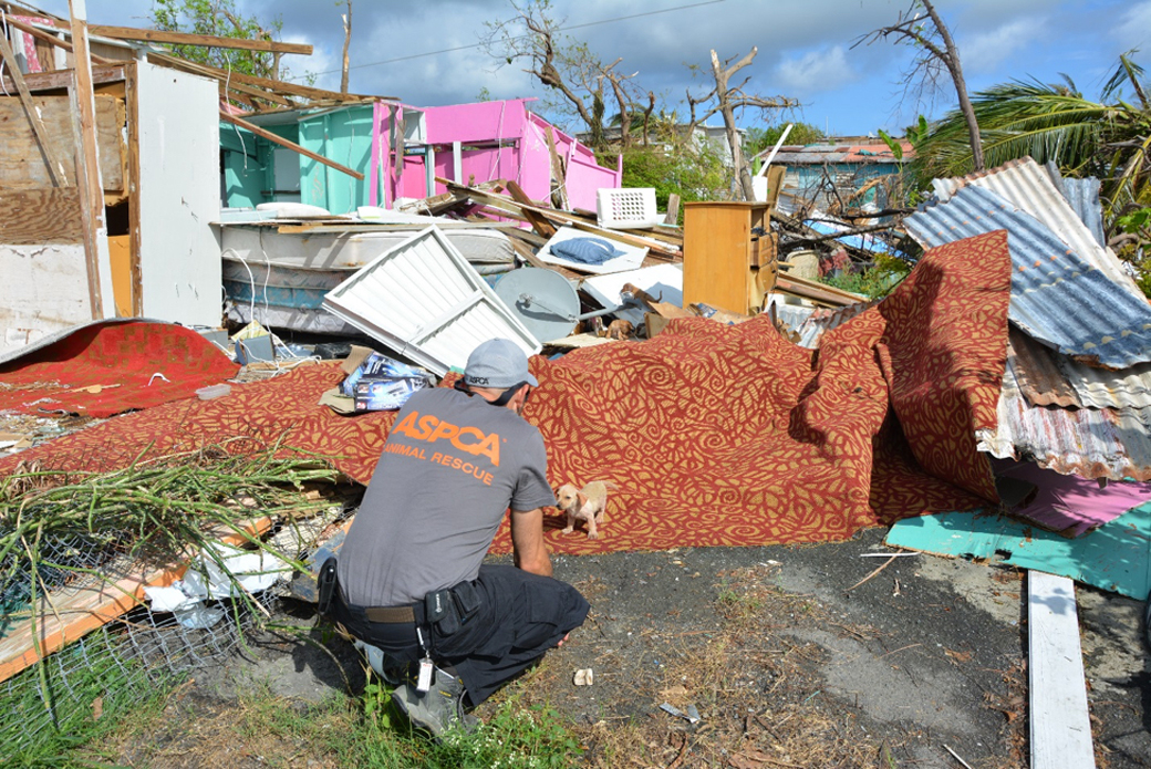 responder near a destroyed home