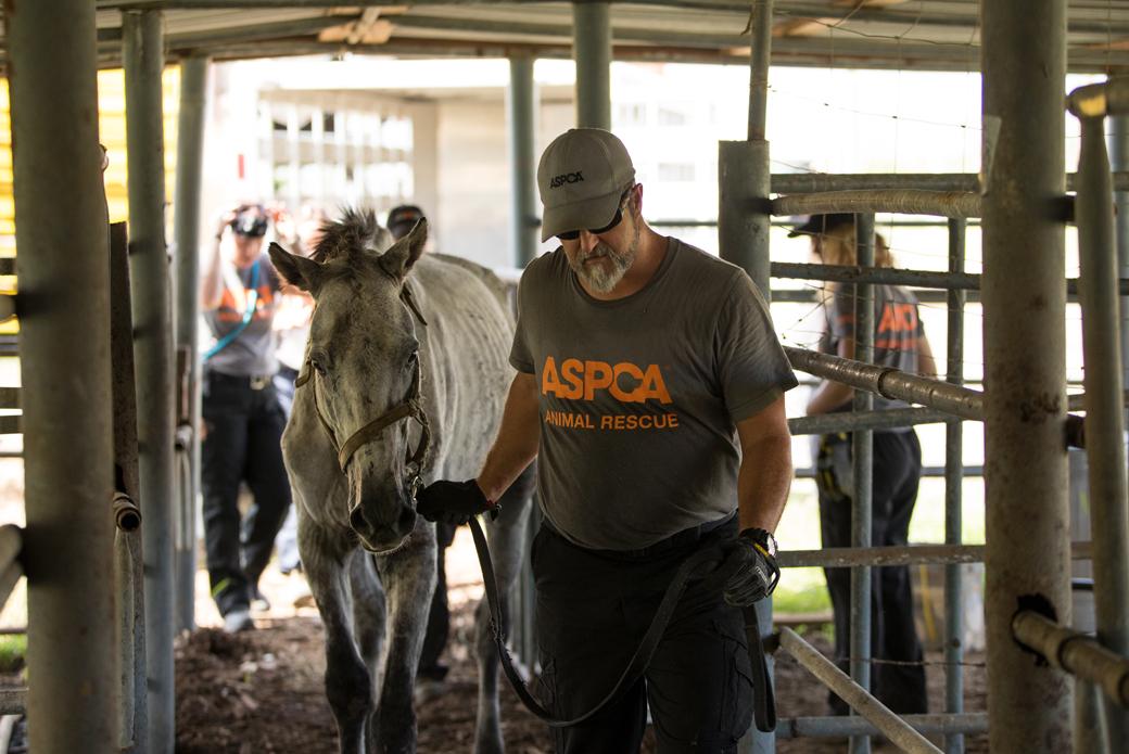 responder leading a horse