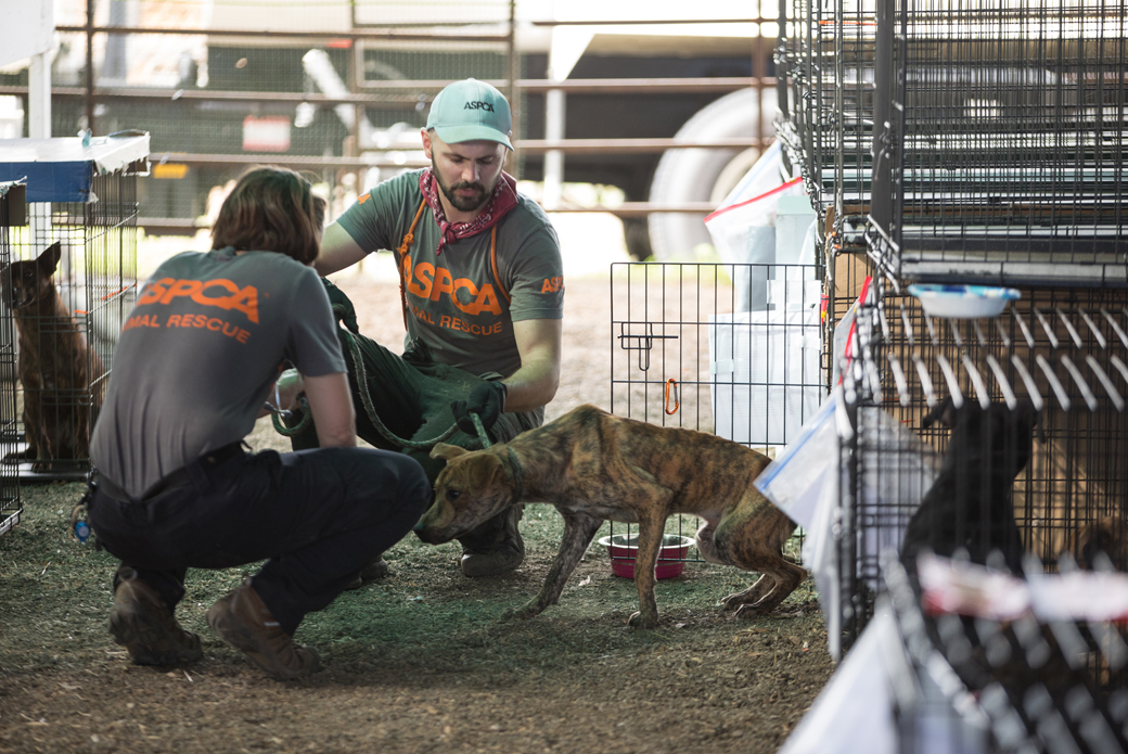 responders with a starving dog