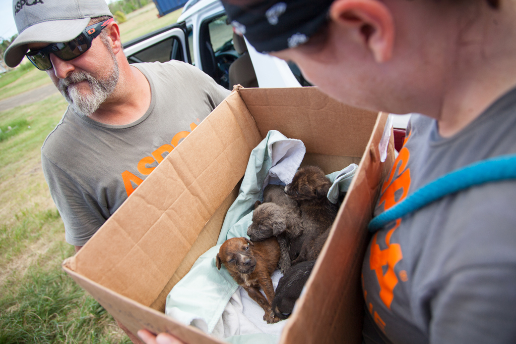 responder holding a box with puppies in it