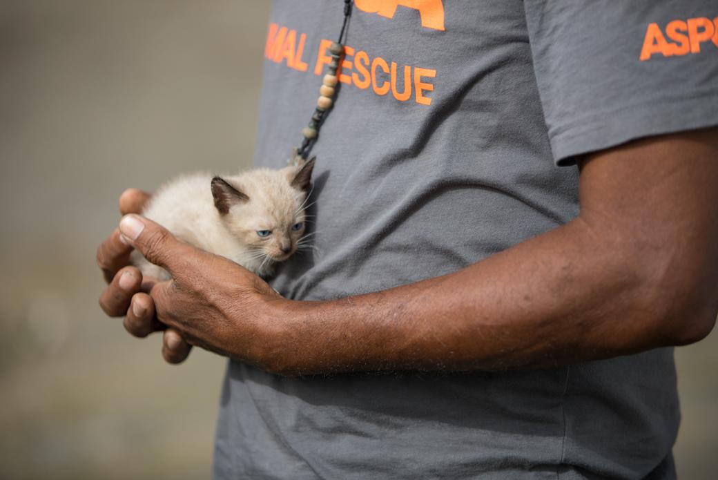 responder holding a kitten