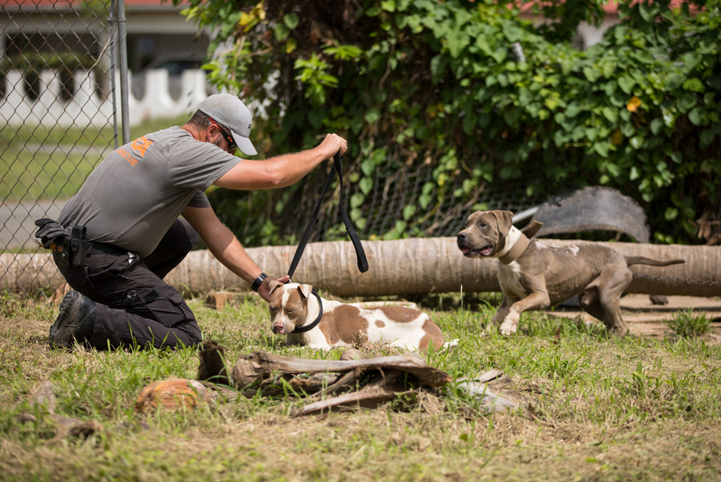 responder with two pitbulls