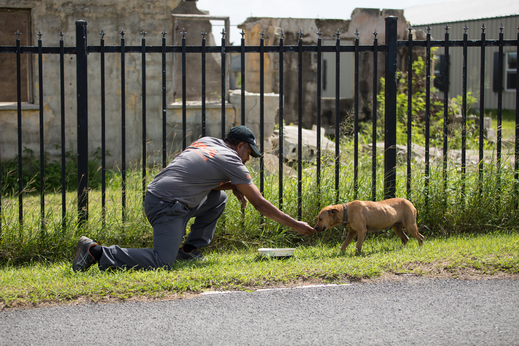 a responder reaching out to a lost dog