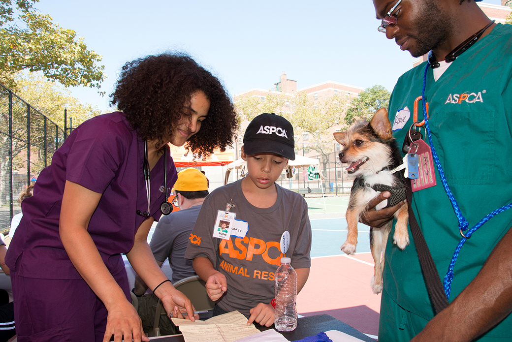 Mateo shadows a couple of ASPCA veterinarians.